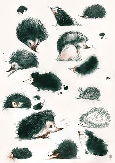One pinner stated: I love hedgehogs. In France, they are rather tiny shy…