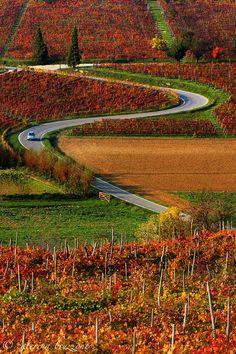 Autumn in Monferrato by Caterina Bruzzone on 500px