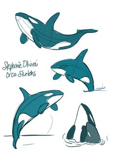 Orcas sketches for the June mini assignment