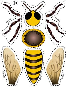 Honey Bee Life Cycle, Bee Activities, Theme Nature, Bee Boxes, Bugs And Insects, Kits For Kids, Picture Cards, Bee Keeping, Life Cycles