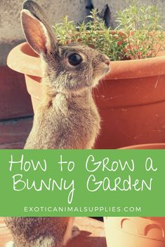 How to Grow a Bunny Garden Fresh Fruit & Vegetables for Rabbits : Feed your pet rabbit fresh, organic, and pesticide free fruits and veggies by growing your own bunny garden. Check out these easy to grow fruits and veggies that both you and your rabbit c Pet Bunny Rabbits, Meat Rabbits, Raising Rabbits, Food For Rabbits, Caring For Rabbits, Vegetables For Rabbits, Rabbit Diet, Wild Rabbit Food, Wild Bunny