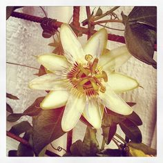 den blommar så fint