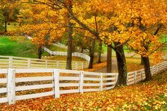 Whilel visiting Virginia in the fall, we drove through some beautiful areas of horse country.  Sprawling horse farms with large fenced-in fields were scattered among the rolling hills, creating many idyllic scenes.  The fall colors added even more to the beauty.  This is a view down the driveway of one of these farms.