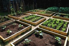 Vegetable+Gardening+For+Beginners | How to Build Vegetable Gardening for Beginners | Annies Garden #GardeningforBeginners