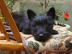 sweet puppy resting
