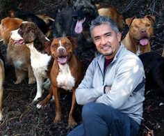 Do you love animals? Have you ever found yourself having an unusual, deep connection with a pet? Then animal psychology might be the career path for you. Animal psychologists work closely with pets to change their behavioral patterns