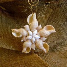 Striped Cream Fox Seashell Star Ornament