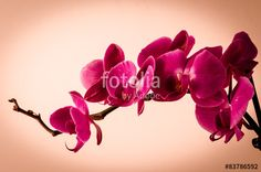 a bloomed branch of orchids