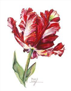 Red Estella Tulip // Page Lee Hufty