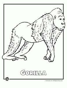 9 Most Endangered Rainforest Animals Coloring Pages | Animal Jr.
