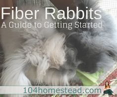 Congratulations! Rabbits are the perfect choice for a backyard farmer that would like to start producing their own fibers for either resale or crafts.