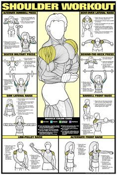SHOULDER WORKOUT Wall Chart Poster - Co-Ed (Men's and Women's) -Available at www.sportsposterwarehouse.com