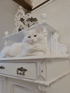 White Rose Cottage Kitty