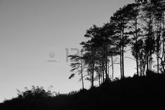evening in black and white