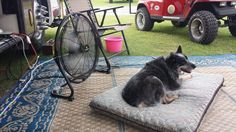 Annie cooling off at Teeter's Campground!.  Leah Scarborough