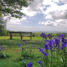 A solitary bench overlooking a fantastic view across Chailey Common towards the South Downs in Sussex, bluebells in the foreground.. #parkbench #view #sky #clouds #common #countryside #countrywalk #bright #contrast #bluesky #cloudscape #bluebells #chailey #chaileycommon #nationaltrust #nature #vibrant #sussex #england #beautyspot #fluffyclouds #southdowns #southeast #solitary