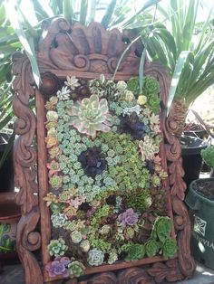 succulants in frames | This is an interesting vertical succulent frame display they made.