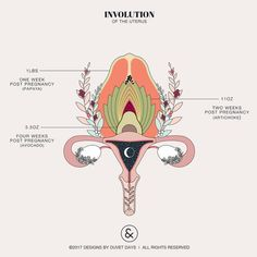 Unilateral Salpingo-Oophorectomy - Designs by Duvet Days Anatomy Illustrations hebamme Involution of the Uterus Pelvis Anatomy, Lung Anatomy, Heart Anatomy, Brain Anatomy, Anatomy Art, Fetus In Womb, Éphémères Vintage, Duvet Day, Birth Art