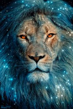 Lion Animation In memory of the noble Cecil Beautiful Cats, Animals Beautiful, Simply Beautiful, Animals And Pets, Cute Animals, Wild Animals, Lion Of Judah, Lion Art, Big Cats