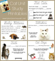 "Cats Unit Study based on the book, ""Why Do Cats Meow"" 1st grade level {free printables}"
