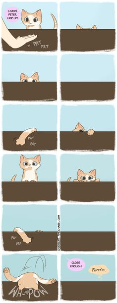 Feline Perseverance. This is so my cat...