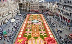 Brussels: sprawling over the cobblestones at Grand-Palace, the Flower Carpet (Tapis de Fleurs deBruxelles) is comprised of about 750,000 begonias and weaves a bright, complex design in many colors. The begonia offers an artist's palette of hues—vivid saturation, light pastels, or variegated and white. Where the blossom's extensive color palette falls short (i.e. green and brown), landscape designers will use an accent of grass or bark.The entire carpet is 1800 square meters.