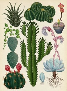 The Botanical Drawings by Katie Scott - . The Botanical Drawings by Katie Scott – Gravure Illustration, Plant Illustration, Cactus Drawing, Plant Drawing, Daisy Drawing, Botanical Drawings, Botanical Prints, Draw Character, Art Et Nature