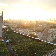 #brooklyngrangefarm #rooftop builds green spaces, and promotes sustainable living and local ecology through #food #education and #events Brooklyn Grange Farm is the world's largest rooftop grower, producing everything from #organic #salad to rich orange-yolked eggs, all with knockout views of the #manhattan #skyline TAGS #homeandawayholidays #newyork #wonderland #picoftheday #instadaily #instagood #instafood #tourist #travel #traveler #tour #traveling #wanderlust #aroundtheworld…
