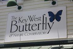 The Key West Butterfly and Nature Conservatory #keywest #MArriottCourtyardKeyWest #dreamkeywestvacation