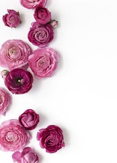 Styling and Photography by Shay Cochrane | http://www.shaycochrane.com | pink, florals, floral styled stock