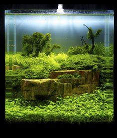 I would like to go diving in this tiny aquarium. Aquascaping, Aquarium Landscape, Nature Aquarium, Aquarium Terrarium, Planted Aquarium, Aquarium Design, Betta Tank, Betta Fish, Paludarium