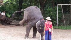 Chiang Mai Elephant, Elephant Camp, I Am Awesome, Camping, Animals, Campsite, Animales, Animaux, Animal