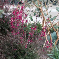 CAF-1 Rogers Gardens, Our Environment, Garden Styles, Garden Inspiration, 1, Gardening, Display, Photos, Floor Space