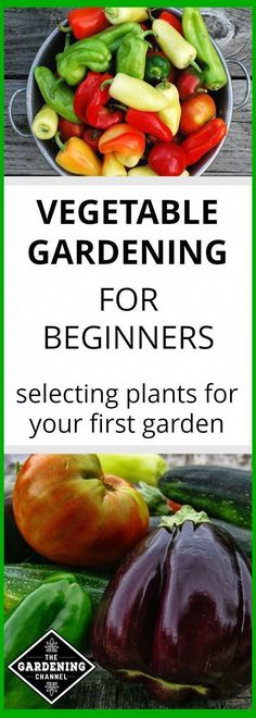 Learn how to select plants for your first vegetable garden. Learn which vegetable plants are easy to grow and how to save money by gardening. #backyardvegetablegarden #gardenplans #vegetablegardentip