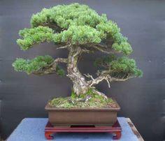 bonsai-in-japan.jpg (400×343)