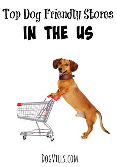 Can't bear to leave your pooch behind while you go shopping? Check out this list of the top dog friendly stores in the US and bring him along for the ride!