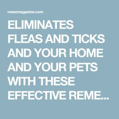 Natural Non Toxic Flea Infestation Solutions For Home And Pets