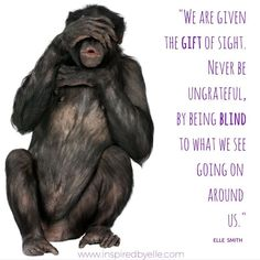 We are given the gift of sight. Quote.  #quotes #GiftOfSight #SeeingIsBelieving