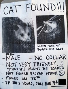 Cat found!!!  (Ohhhhh!  My stomach hurts LOL  I cant stop laughing!  I can picture someone actually... LOL doing this!!!!