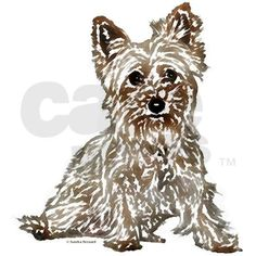 Silky Terrier (sketch)