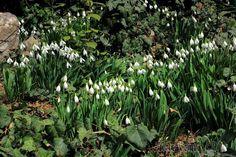 Февраль в Крыму. Никитский Ботанический сад. Подснежники цветут