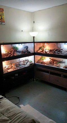 Credit: Daniel Alexander Sevilla - Anita Smith Home Reptile Cage, Reptile House, Reptile Habitat, Reptile Room, Reptile Tanks, Gecko Habitat, Tortoise Habitat, Bearded Dragon Terrarium, Bearded Dragon Cage
