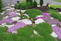 steingarten gartendeko thymian bodendecker lila steine idee