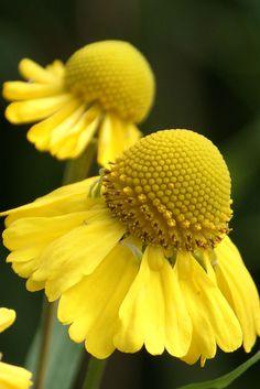 Loving yellow ...