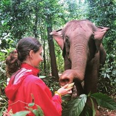 Adventures are waiting where are you? Visit our website (link in Bio) to avail a FLAT $50 DISCOUNT on all Summer Volunteer Adventure Programs 2018.  #jungletour  #volsol #volunteer #adventuretime #theoutbound #mypixeldiary #elephants #summer #plan  #2018  #volunteerwork #makeadifference #instagood #instadaily #inspire #photooftheday #thailand #thaielephant #beauty