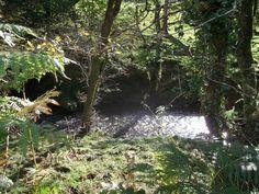 Pam Woods (Gallwwwanders) on Twitter Fall Winter, Autumn, Woods, Scotland, Wildlife, October, Twitter, Plants, Fall
