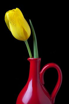 yellow lily in red vase