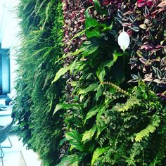 Living wall in airport