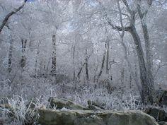 Snow062  by cheryl astern