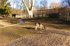 Tierpark Langen Erlen